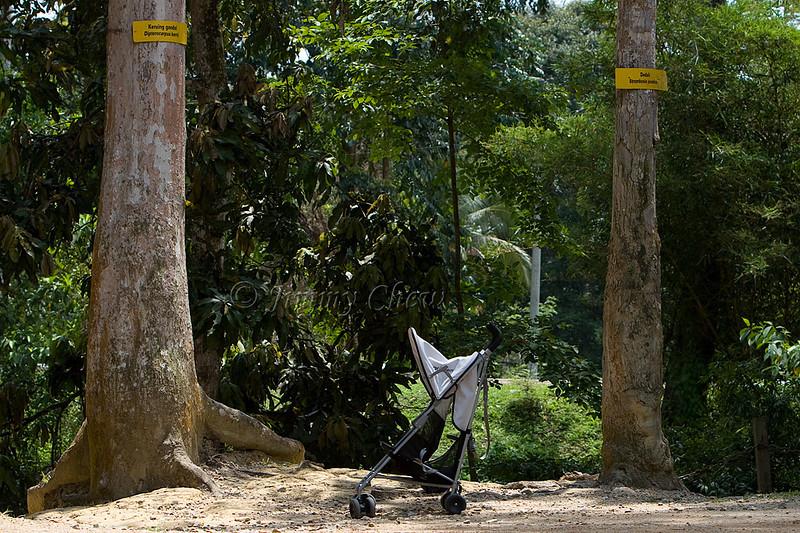 Stroller between two trees.