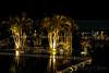 Golden palm trees.