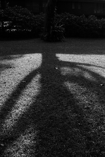 Tree shadow.