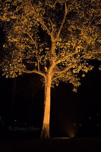 Night shot of this tree.