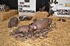 Ohio State Fair 2012 (80 of 88)