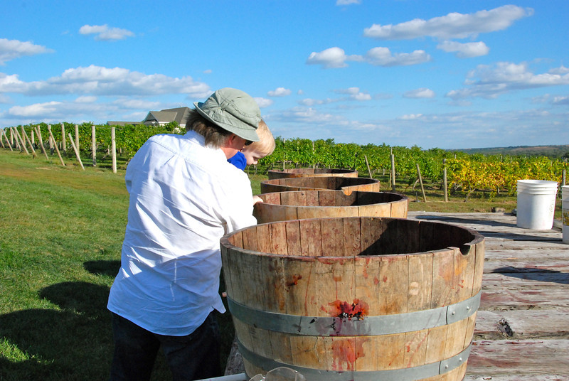 Checking out the barrels for the grape stomping contest.