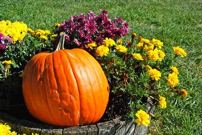 Pumpkin and mums.