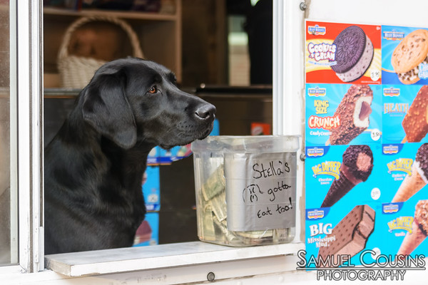 A dog selling ice cream from the Good Humor Ice Cream truck.