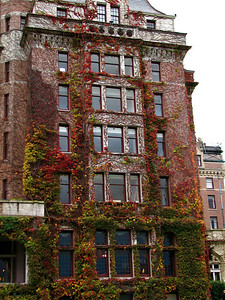Beautiful ivy on The Empress