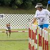 agility-hilo-20140517-004