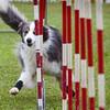 agility-hilo-20140517-013