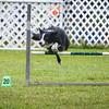agility-hilo-20140517-006