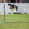 agility-hilo-20140517-011