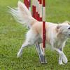 agility-hilo-20140517-009