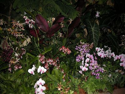 Orchid Nights, Atlanta Botanical Garden - Feb 2005