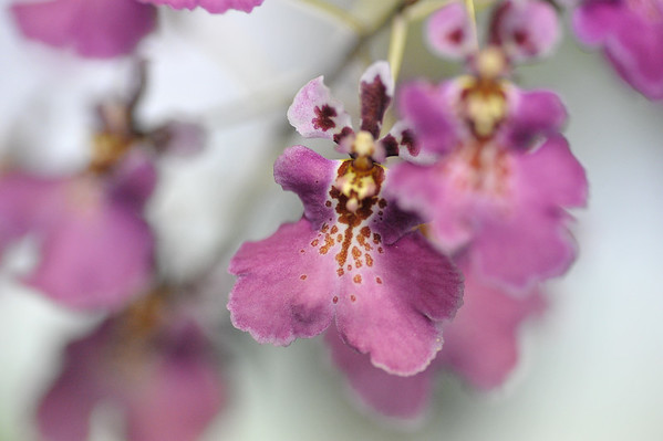 Nightcliff Orchid Society, meetings 2016