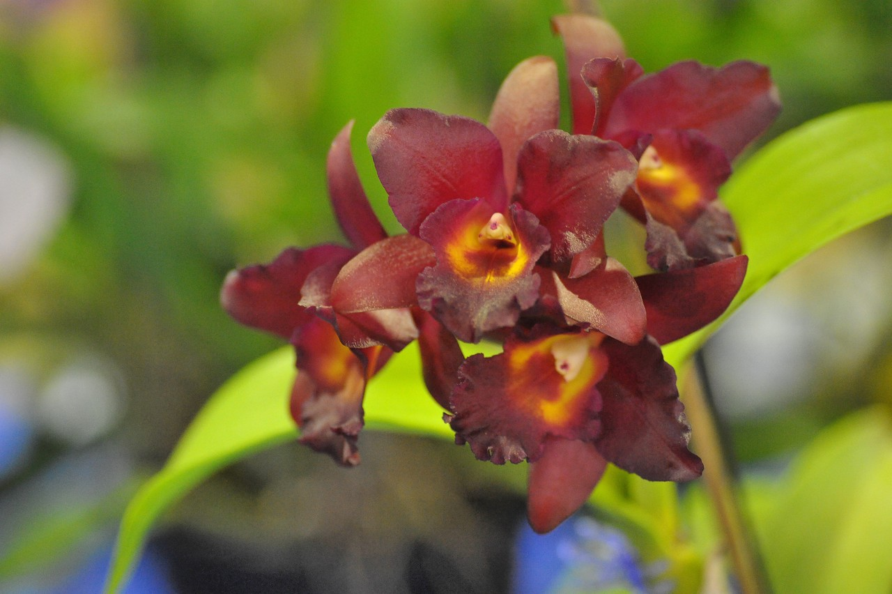 Pot. Alyssa Valmadre ' Clifton'