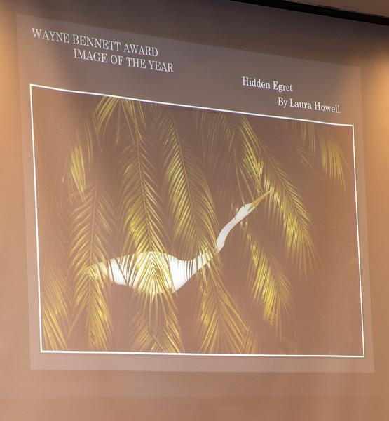 Image of the Year!  Hidden Egret