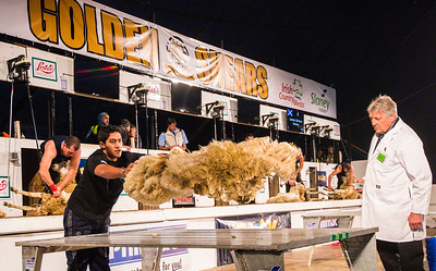 Current Champion Jeol Henare of Gisborne representing New Zealand at the Golden Shears World Championships. In action during the Wool Handling heats.