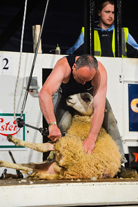 Seamus Rooney representing Northern Ireland at the Golden Shears World Championships. On his way to 5th place in the All Ireland Senior Shearing.