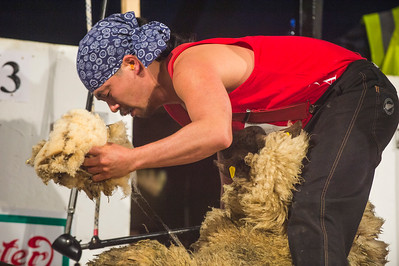 Shun Oishi representing Japan at the Golden Shears World Championships, competing in the World Shearing heats.