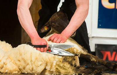 Calum Shaw of Scotland at the Golden Shears Blade Shearing World Championship.