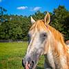 SRd1709_3439_Horses