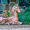 SRd1709_3487_Horses