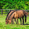 SRd1709_3430_Horses