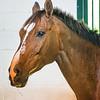 SRd1709_3456_Horses