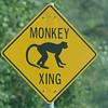 Monkeys? (St. Kitts 2005)