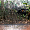 American-Museum-of-Natural-History-Black-Bear-HDR-1