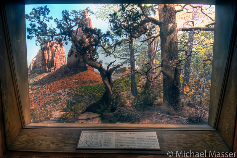 American-Museum-of-Natural-History-Pinon-Juniper-Forest-HDR
