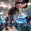 American-Museum-of-Natural-History-Tyrannosaurus-Rex-HDR-2