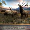 American-Museum-of-Natural-History-Wapiti-HDR