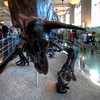 American-Museum-of-Natural-History-Triceratops-HDR-2