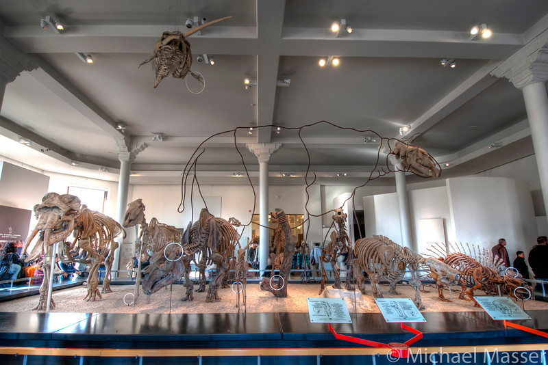 American-Museum-of-Natural-History-Mammals-HDR-1