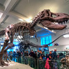 American-Museum-of-Natural-History-Tyrannosaurus-Rex-HDR-1