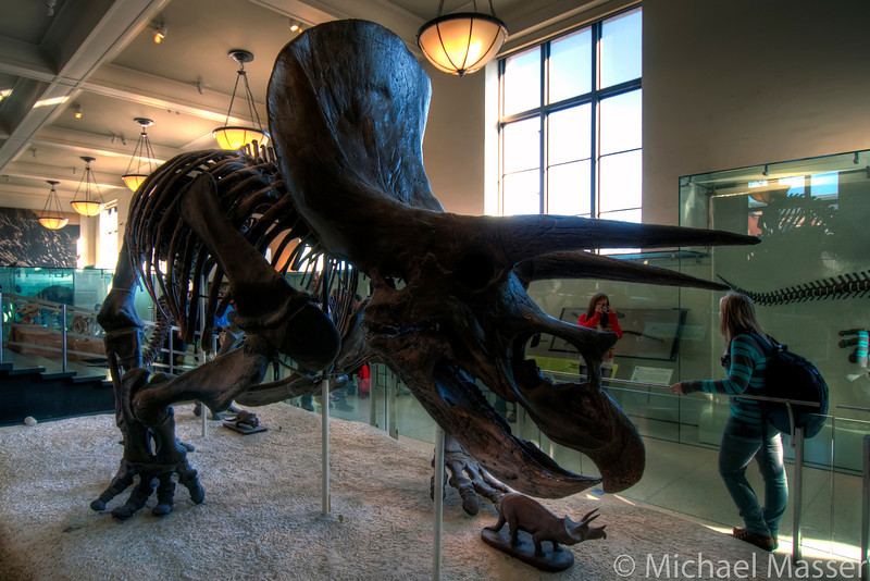 American-Museum-of-Natural-History-Triceratops-HDR-1