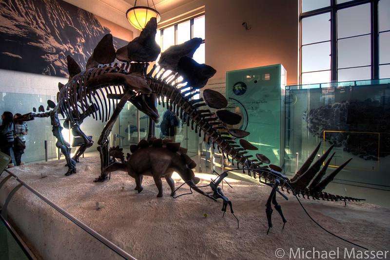 American-Museum-of-Natural-History-Stegosaurus-HDR