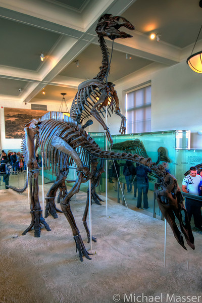 American-Museum-of-Natural-History-Dinosaurs-HDR-1