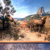 American-Museum-of-Natural-History-Mule-Deer-HDR