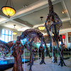 American-Museum-of-Natural-History-Dinosaurs-HDR-2