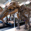 American-Museum-of-Natural-History-Mammals-HDR-4