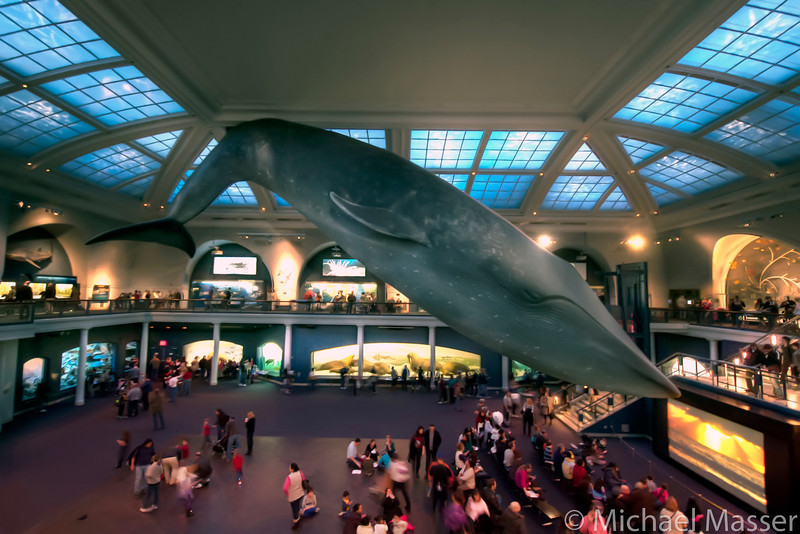 American-Museum-of-Natural-History-Blue-Whale-HDR