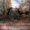 American-Museum-of-Natural-History-Whitetail-Deer-HDR