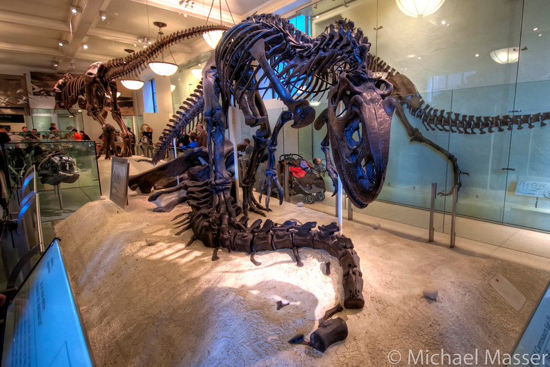 American-Museum-of-Natural-History-Velociraptor-HDR