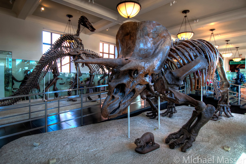 American-Museum-of-Natural-History-Triceratops-HDR-3
