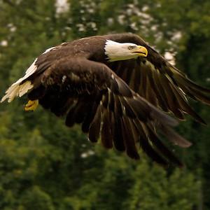 TSBR Eagle Release