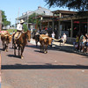 Here come the longhorns!