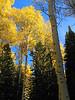 Timp Autumn