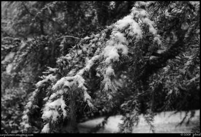 Atlanta Snow 2008