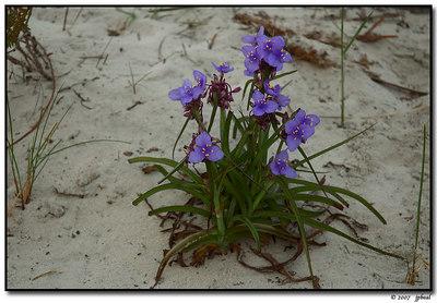 Spring Break 07