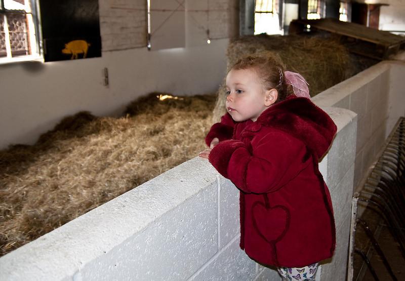 Bethan looks at Peppa Pig.